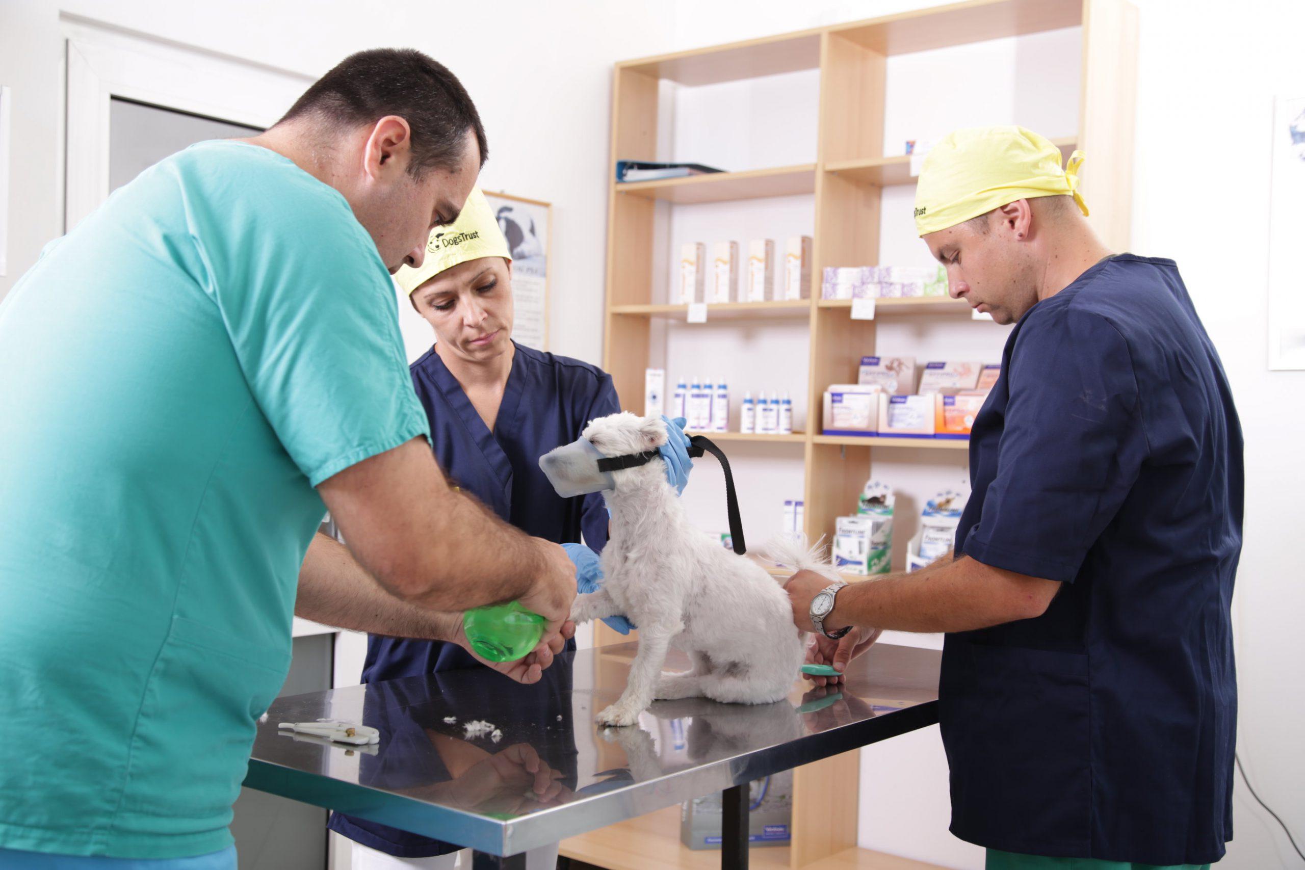veterinarski zavod slaven banja luka